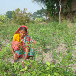 GOURI WORKING HER KITCHEN GARDEN.