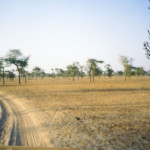 SEIS Senegalese road 2004