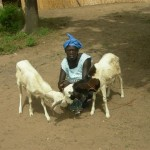 SEIS-goat project Diohine village