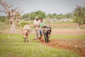 GHCO-bullock and plow project