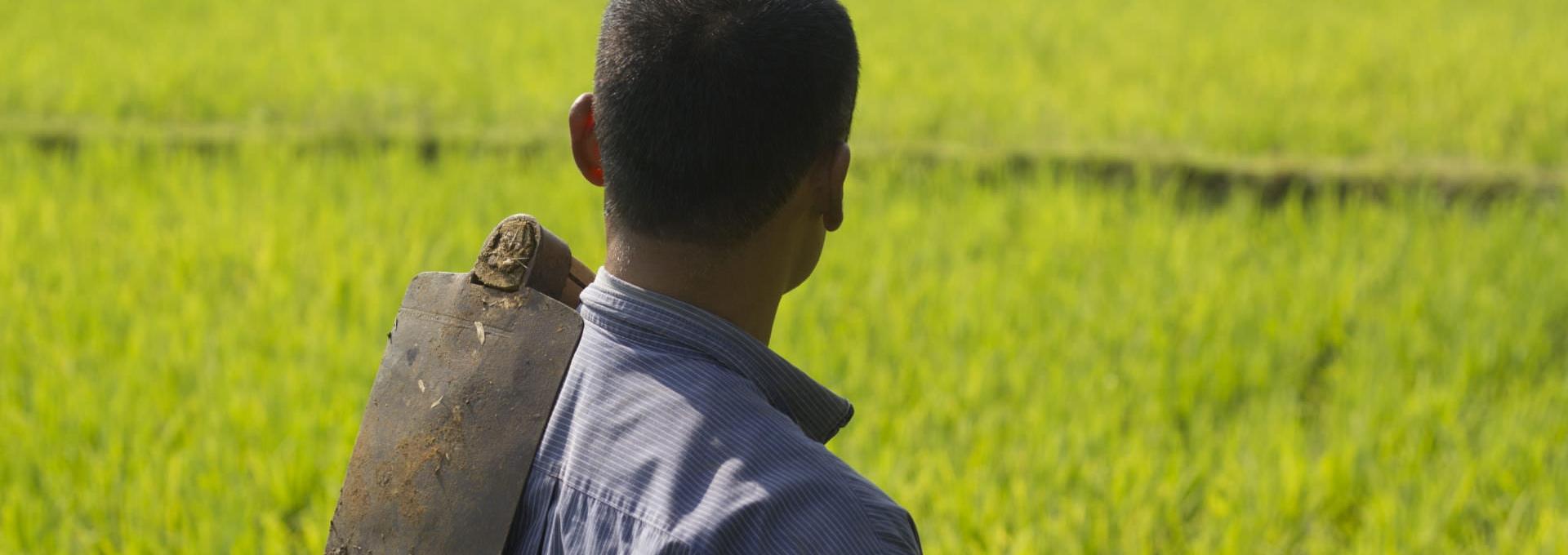 Indonesian suku puoli videot
