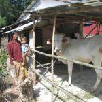 CBFH Widow Tes Sokha.cow bank.June 2017 w350 h350