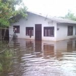 A Story from the Flood
