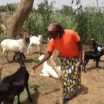 NEEW August 2017 Update Goats for a Breeding Project
