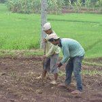 iopi Farming2 2001