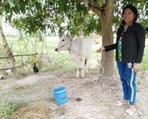 cow bank benefits widow