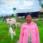 CBCF June 2019 cow
