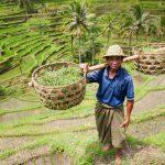 Southeast Asia Farmer